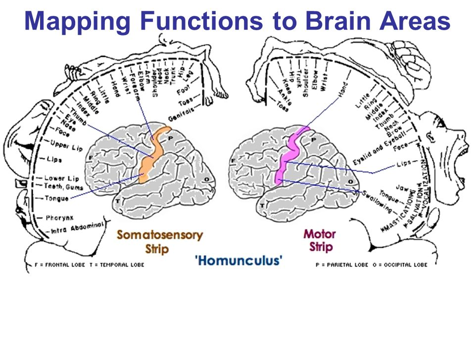 Mapping Functions to Brain Areas