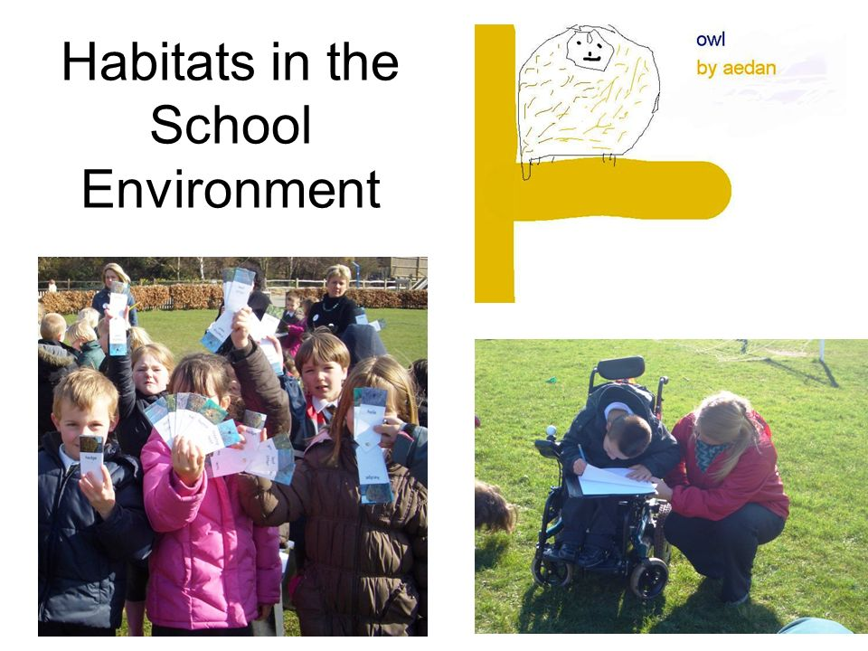 Habitats in the School Environment