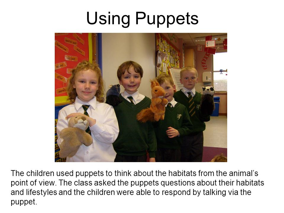 Using Puppets The children used puppets to think about the habitats from the animals point of view. The class asked the puppets questions about their