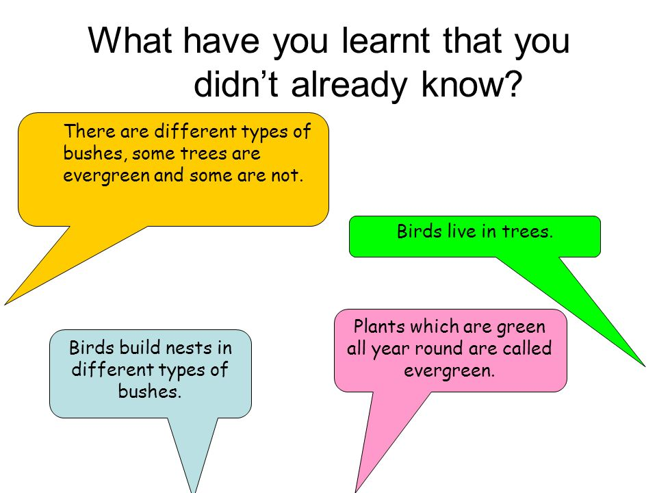 What have you learnt that you didnt already know? Birds build nests in different types of bushes. Birds live in trees. Plants which are green all year