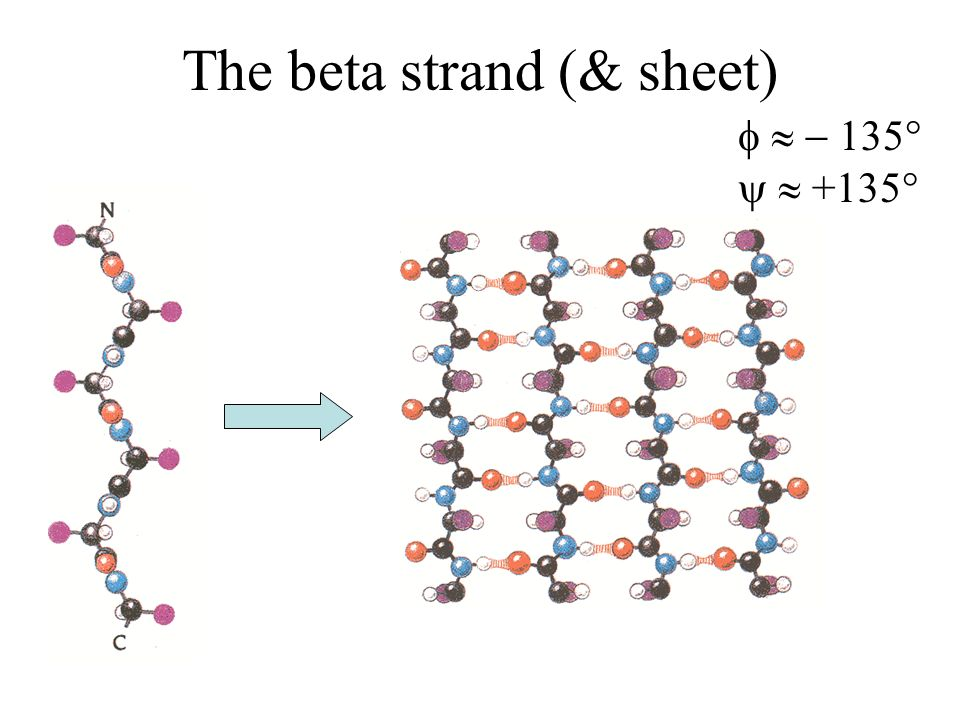 The beta strand (& sheet) 135° +135°