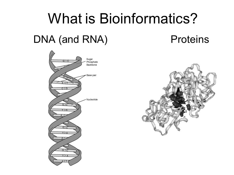 What is Bioinformatics? DNA (and RNA)Proteins