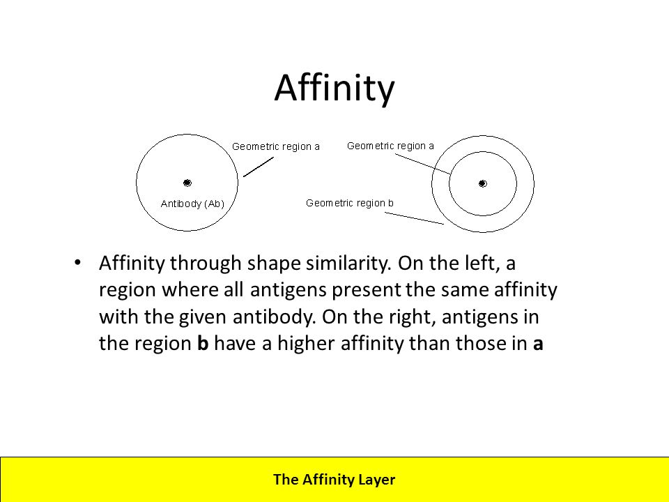 Lecture 4CBA - Artificial Immune Systems The Affinity Layer Affinity Affinity through shape similarity.