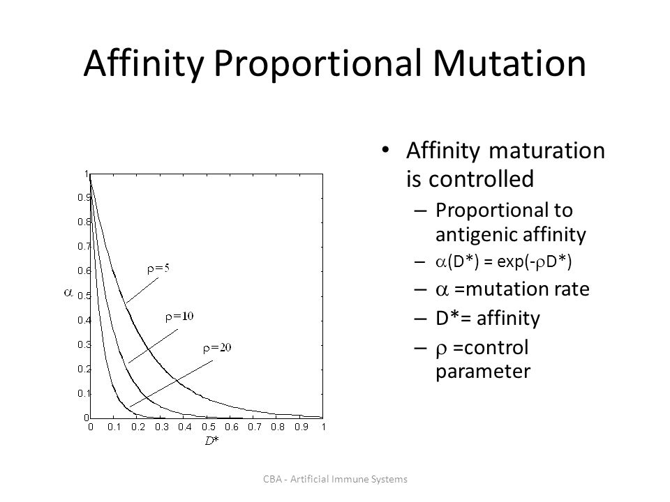 CBA - Artificial Immune Systems Affinity Proportional Mutation Affinity maturation is controlled – Proportional to antigenic affinity – (D*) = exp(- D*) – =mutation rate – D*= affinity – =control parameter