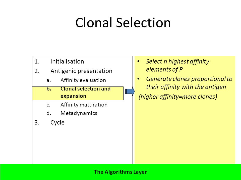 1.Initialisation 2.Antigenic presentation a.Affinity evaluation b.Clonal selection and expansion c.Affinity maturation d.Metadynamics 3.Cycle Lecture 4CBA - Artificial Immune Systems Clonal Selection Select n highest affinity elements of P Generate clones proportional to their affinity with the antigen (higher affinity=more clones) The Algorithms Layer