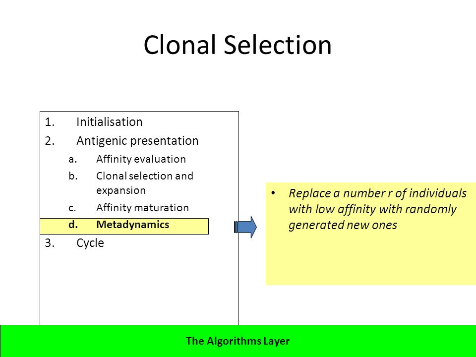 1.Initialisation 2.Antigenic presentation a.Affinity evaluation b.Clonal selection and expansion c.Affinity maturation d.Metadynamics 3.Cycle Lecture 4CBA - Artificial Immune Systems Clonal Selection Replace a number r of individuals with low affinity with randomly generated new ones The Algorithms Layer