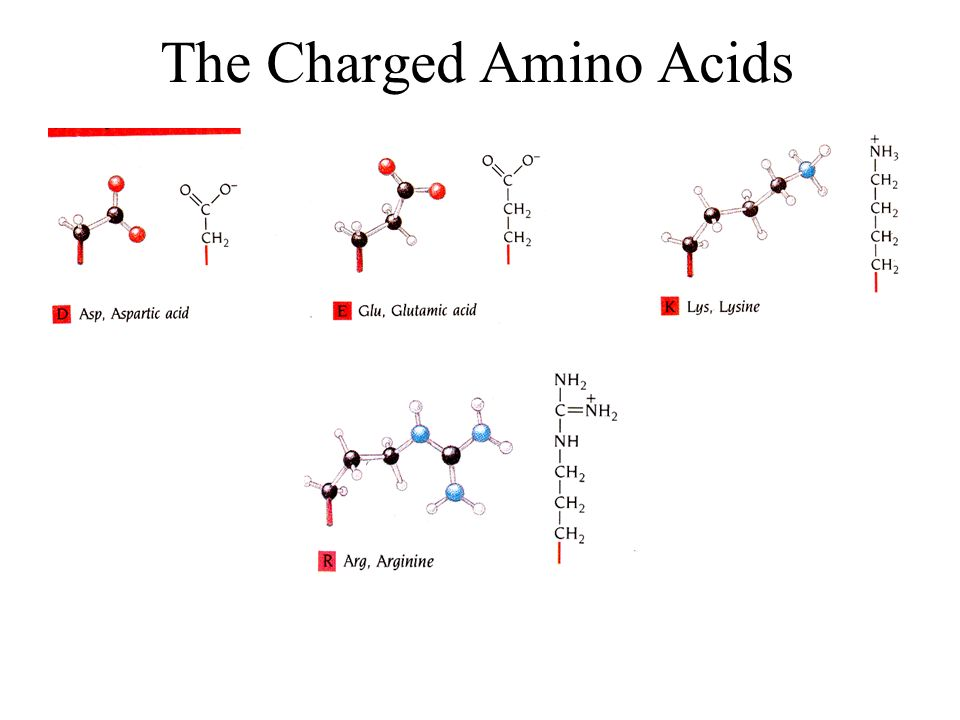 The Charged Amino Acids