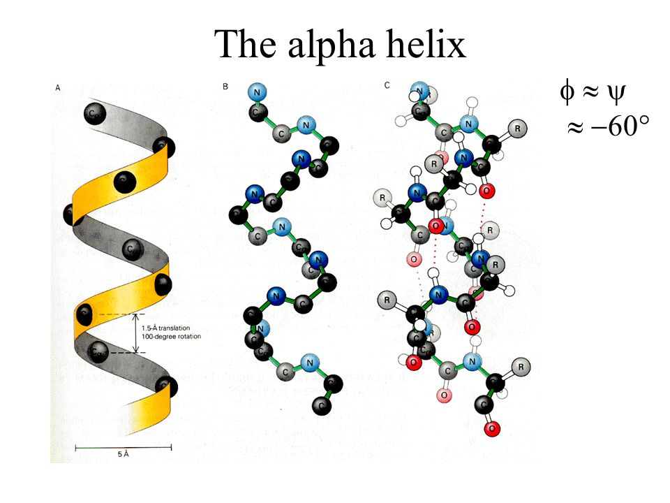 The alpha helix 60°