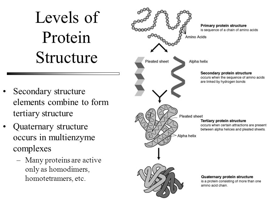 Levels of Protein Structure Secondary structure elements combine to form tertiary structure Quaternary structure occurs in multienzyme complexes –Many