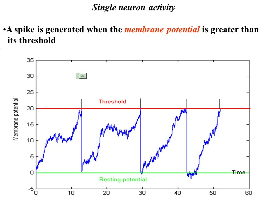 Single neuron activity A spike is generated when the membrane potential is greater than its threshold