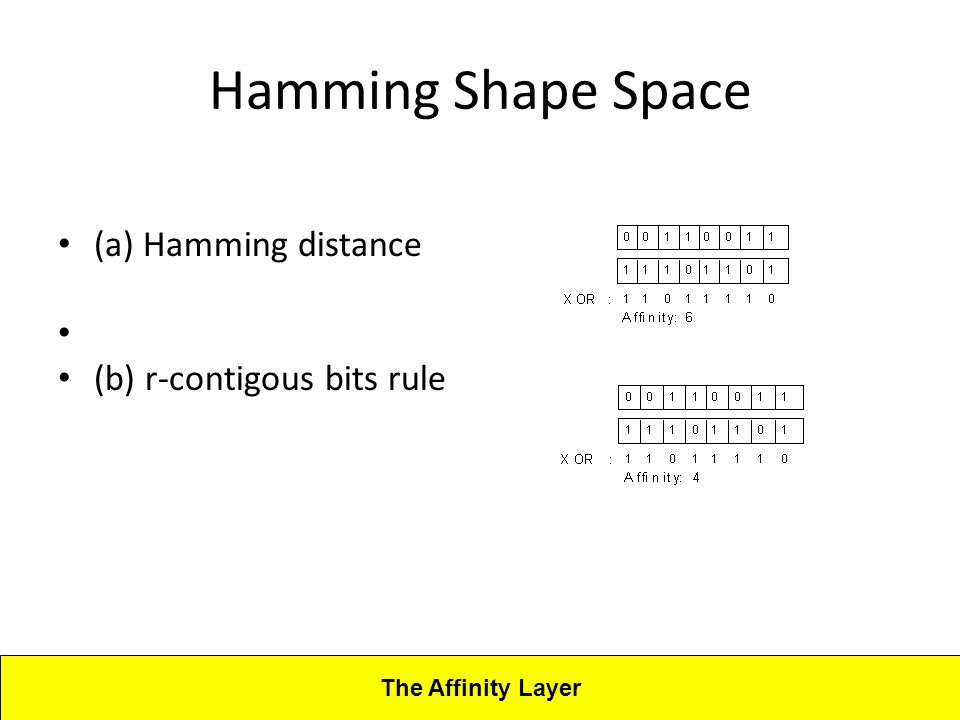 Lecture 4CBA - Artificial Immune Systems Hamming Shape Space (a) Hamming distance (b) r-contigous bits rule The Affinity Layer