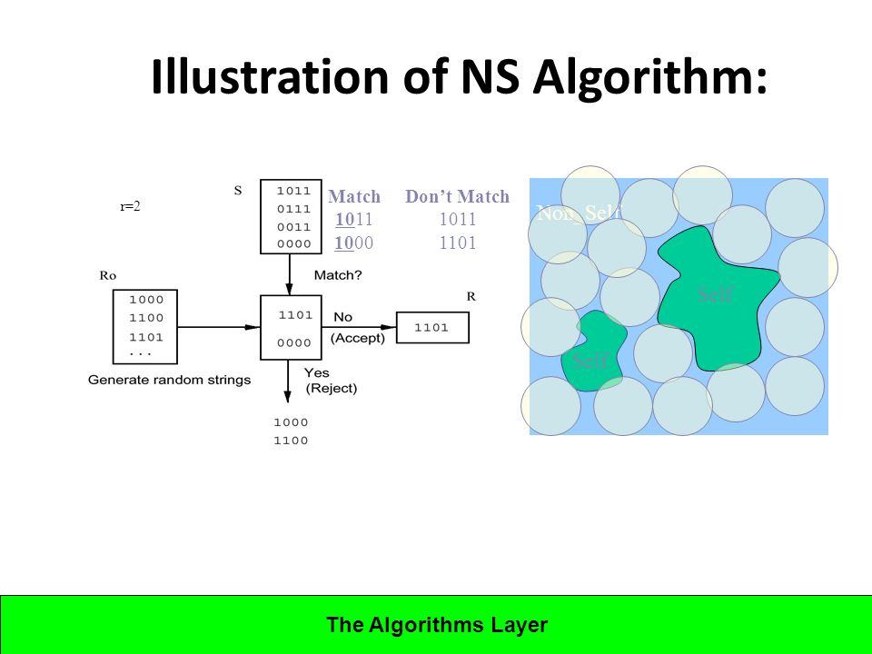 Lecture 5CBA - Artificial Immune Systems Illustration of NS Algorithm: Self Non_Self Self Match 1011 1000 Dont Match 1011 1101 r=2 The Algorithms Layer
