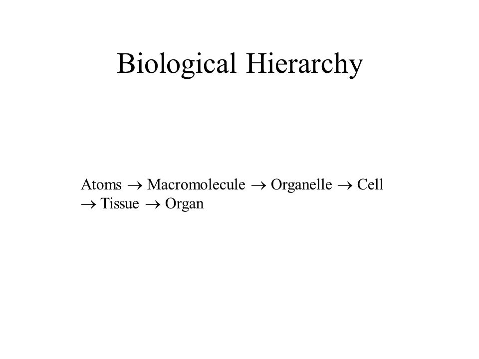Biological Hierarchy Atoms Macromolecule Organelle Cell Tissue Organ