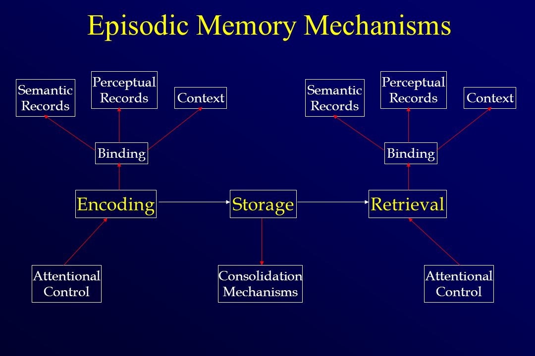 Episodic Memory Mechanisms Consolidation Mechanisms Attentional Control EncodingStorageRetrieval Attentional Control Semantic Records Perceptual Recor