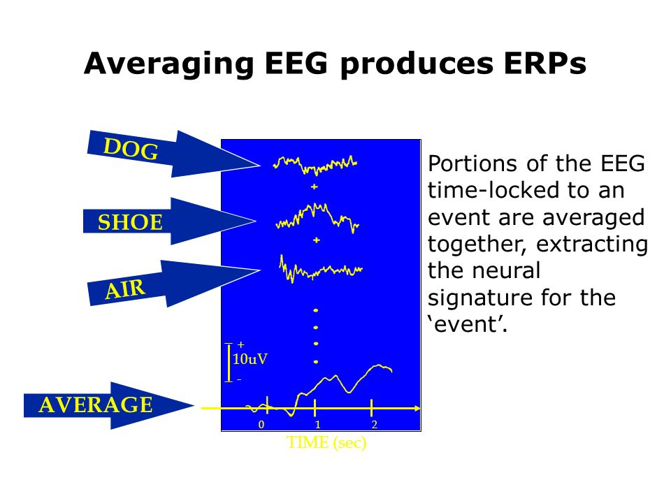 Averaging EEG produces ERPs Portions of the EEG time-locked to an event are averaged together, extracting the neural signature for the event.