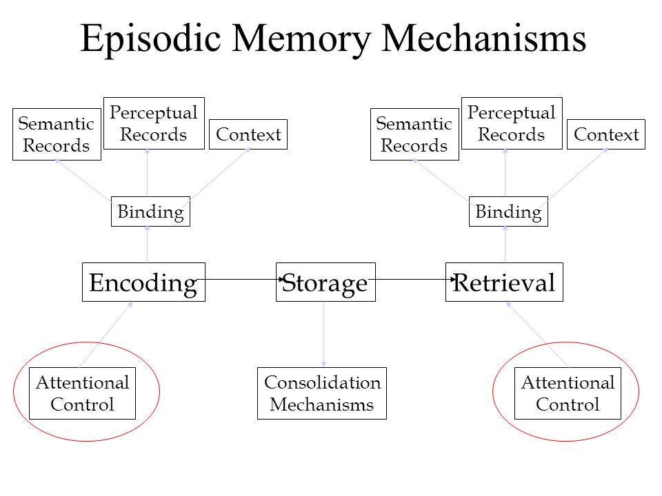 Episodic Memory Mechanisms Consolidation Mechanisms Attentional Control EncodingStorageRetrieval Attentional Control Semantic Records Perceptual Records Binding Context Semantic Records Perceptual Records Binding Context