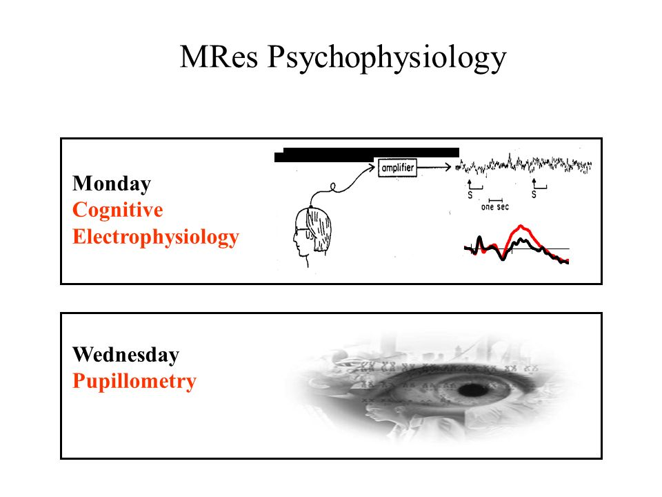 Monday Cognitive Electrophysiology Wednesday Pupillometry MRes Psychophysiology