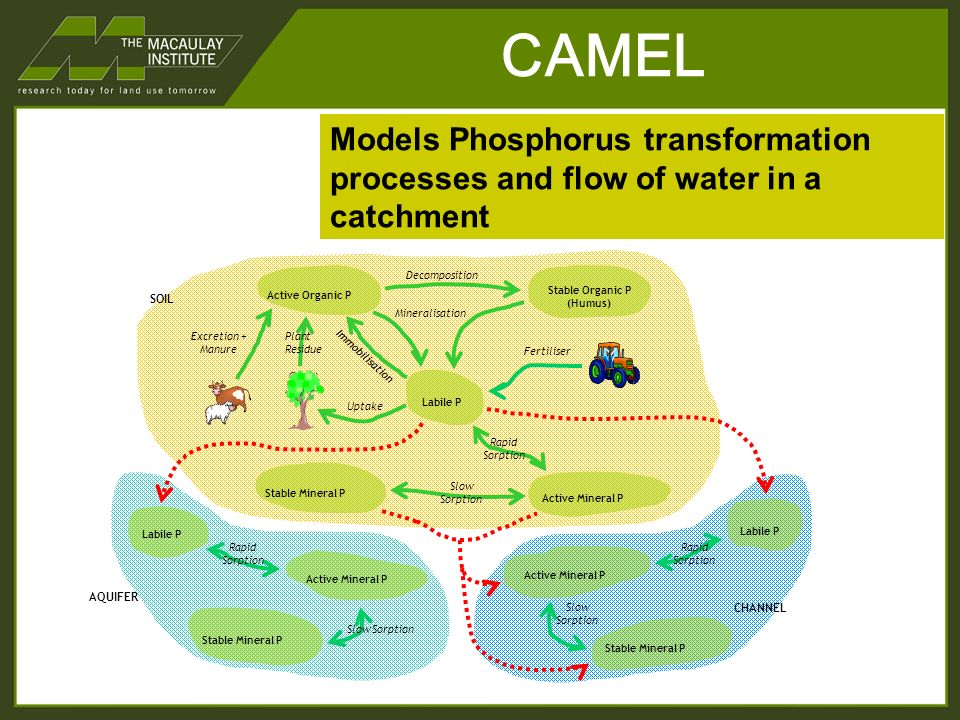 CAMEL CHANNEL AQUIFER Labile P Active Mineral P Stable Mineral P Rapid Sorption Slow Sorption Labile P Active Mineral P Stable Mineral P Rapid Sorption Slow Sorption SOIL Active Organic P Stable Organic P (Humus) Labile P Stable Mineral P Active Mineral P Excretion + Manure Plant Residue Decomposition Immobilisation Rapid Sorption Slow Sorption Mineralisation Uptake Fertiliser Models Phosphorus transformation processes and flow of water in a catchment
