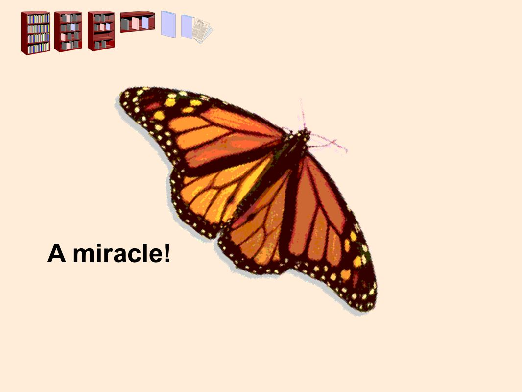 A miracle!