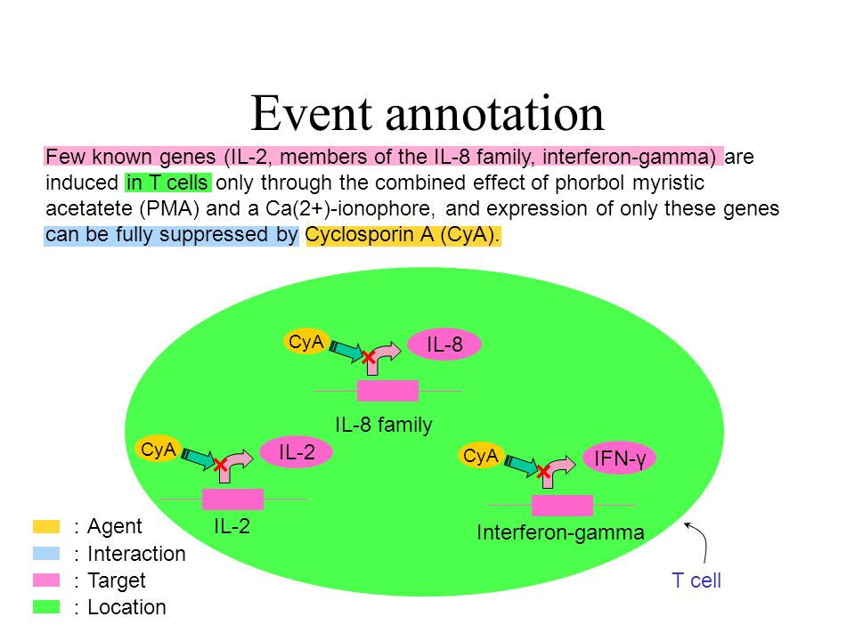 Few known genes (IL-2, members of the IL-8 family, interferon-gamma) are induced in T cells only through the combined effect of phorbol myristic acetatete (PMA) and a Ca(2+)-ionophore, and expression of only these genes can be fully suppressed by Cyclosporin A (CyA).