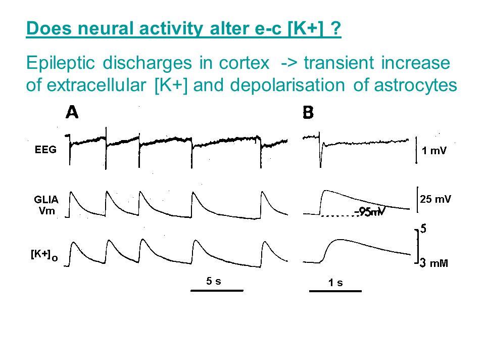 Does neural activity alter e-c [K+] .