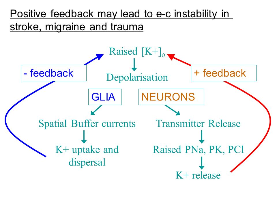 Positive feedback may lead to e-c instability in stroke, migraine and trauma Transmitter Release Raised PNa, PK, PCl K+ release Spatial Buffer currents K+ uptake and dispersal + feedback- feedback GLIANEURONS Raised [K+] o Depolarisation