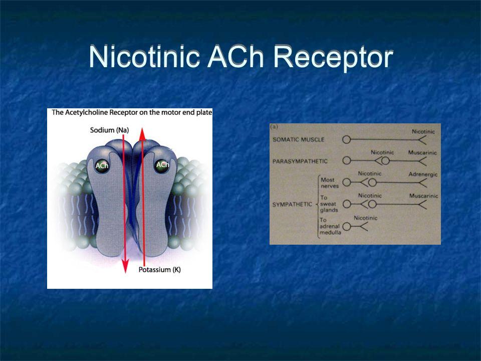 Nicotinic ACh Receptor