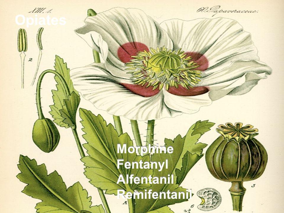 Opiates Morphine Fentanyl Alfentanil Remifentanil Morphine Fentanyl Alfentanil Remifentanil
