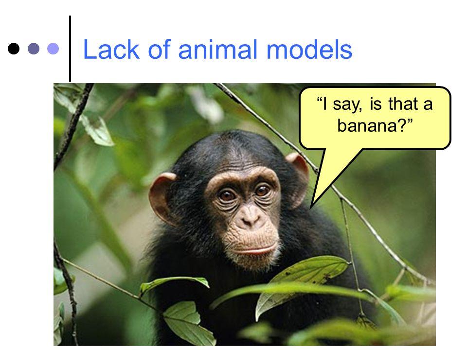 Lack of animal models I say, is that a banana?