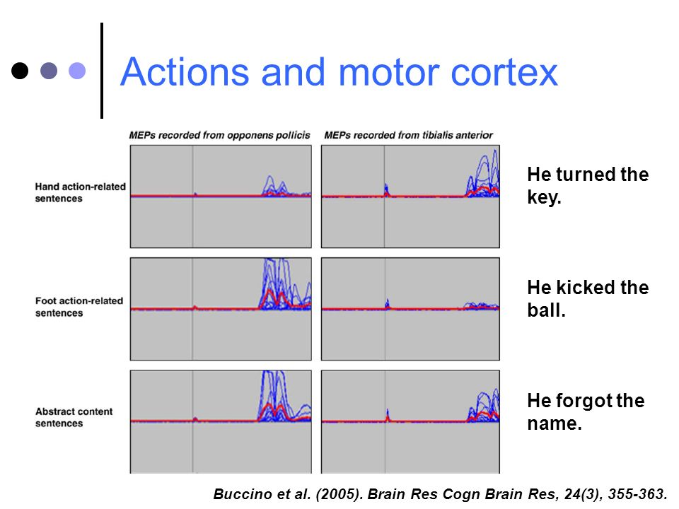 Actions and motor cortex Buccino et al. (2005). Brain Res Cogn Brain Res, 24(3), 355-363. He turned the key. He kicked the ball. He forgot the name.