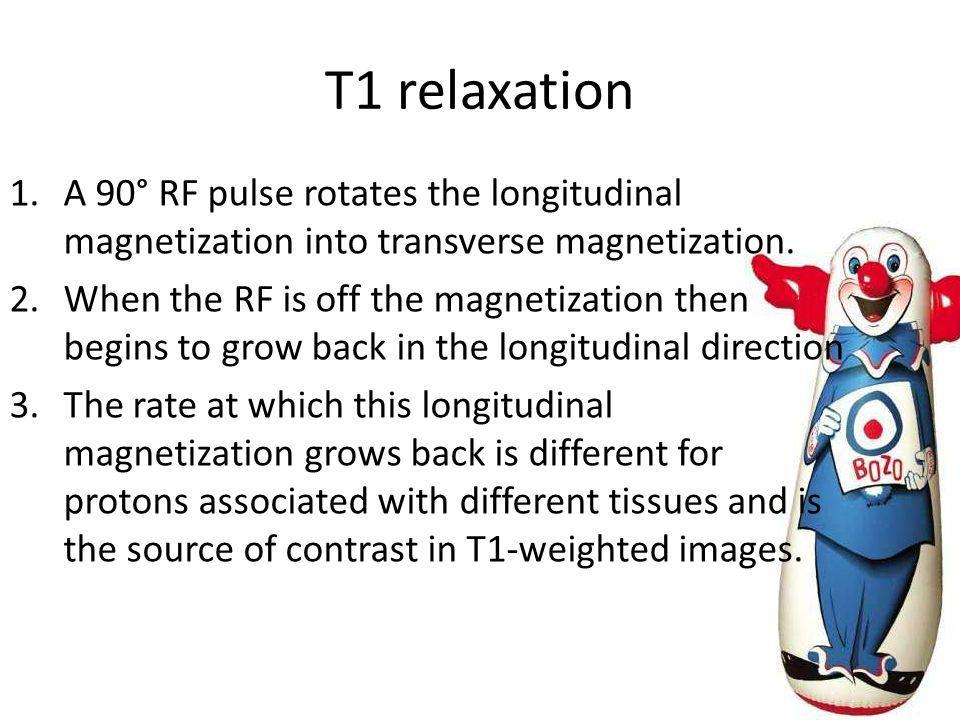 T1 relaxation 1.A 90° RF pulse rotates the longitudinal magnetization into transverse magnetization. 2.When the RF is off the magnetization then begin
