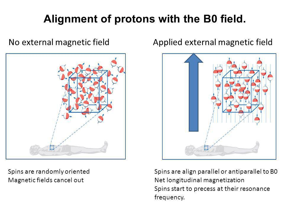 No external magnetic fieldApplied external magnetic field Spins are randomly oriented Magnetic fields cancel out Spins are align parallel or antiparal