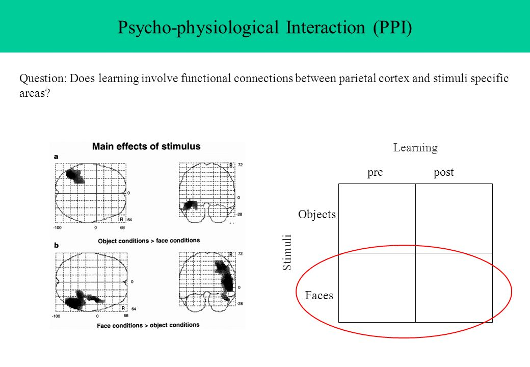 Psycho-physiological Interaction (PPI) Question: Does learning involve functional connections between parietal cortex and stimuli specific areas? Lear