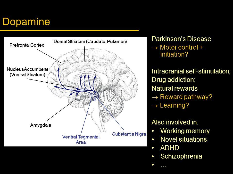 Dopamine Dorsal Striatum (Caudate,Putamen) VentralTegmental Area SubstantiaNigra Amygdala NucleusAccumbens (Ventral Striatum) Prefrontal Cortex Dorsal