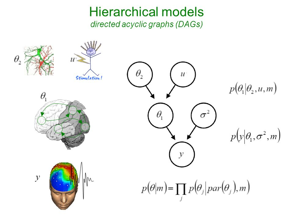 Hierarchical models directed acyclic graphs (DAGs)