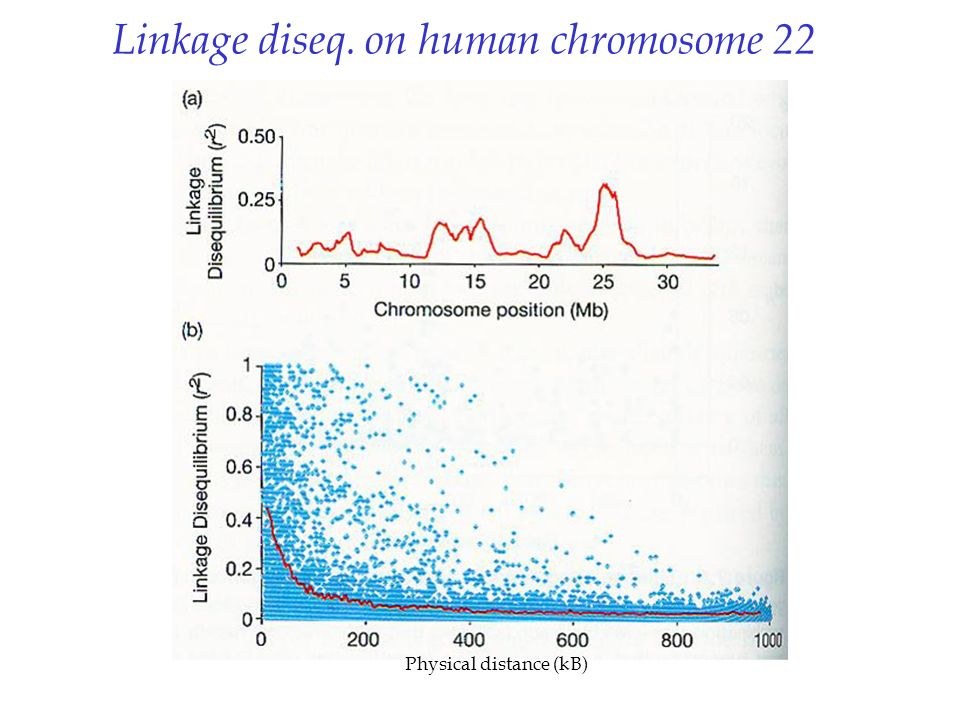 Linkage diseq. on human chromosome 22 Physical distance (kB)