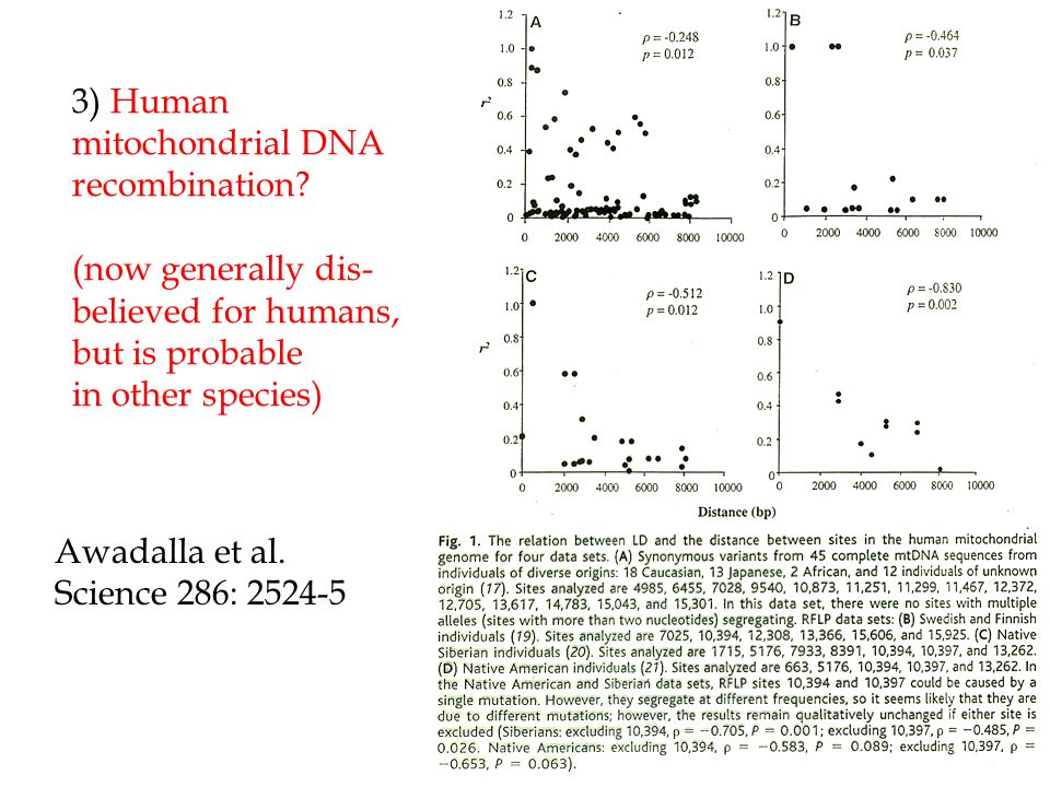 3) Human mitochondrial DNA recombination? (now generally dis- believed for humans, but is probable in other species) Awadalla et al. Science 286: 2524