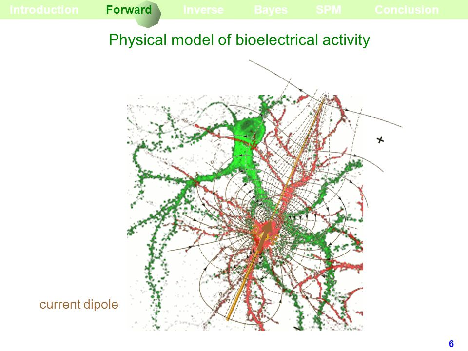 6 current dipole BayesInverseForward Introduction Physical model of bioelectrical activity SPMConclusion