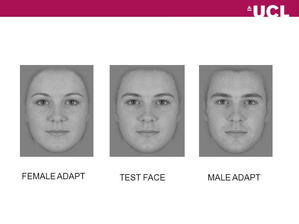 TEST FACE FEMALE ADAPT MALE ADAPT
