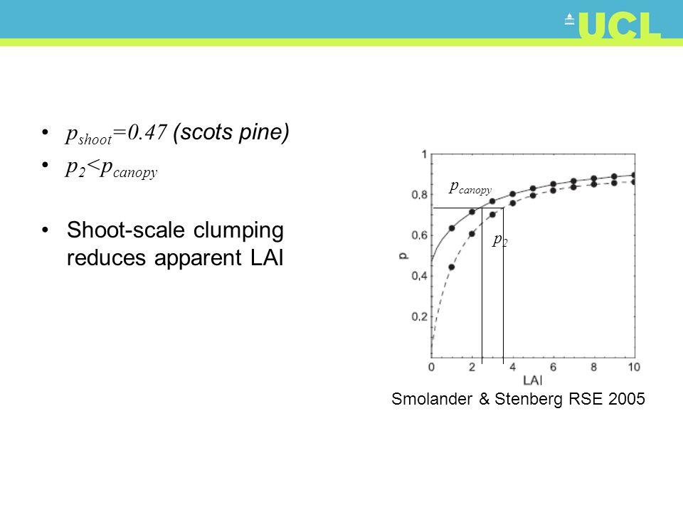 p2p2 p canopy Smolander & Stenberg RSE 2005 p shoot =0.47 (scots pine) p 2 <p canopy Shoot-scale clumping reduces apparent LAI