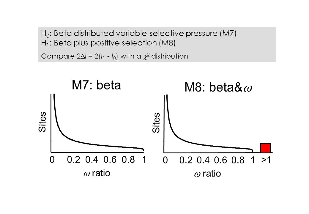00.20.40.60.81 ratio Sites M7: beta M8: beta& 00.20.40.60.81 ratio Sites >1 H 0 : Beta distributed variable selective pressure (M7) H 1 : Beta plus positive selection (M8) Compare 2 l = 2(l 1 - l 0 ) with a 2 distribution