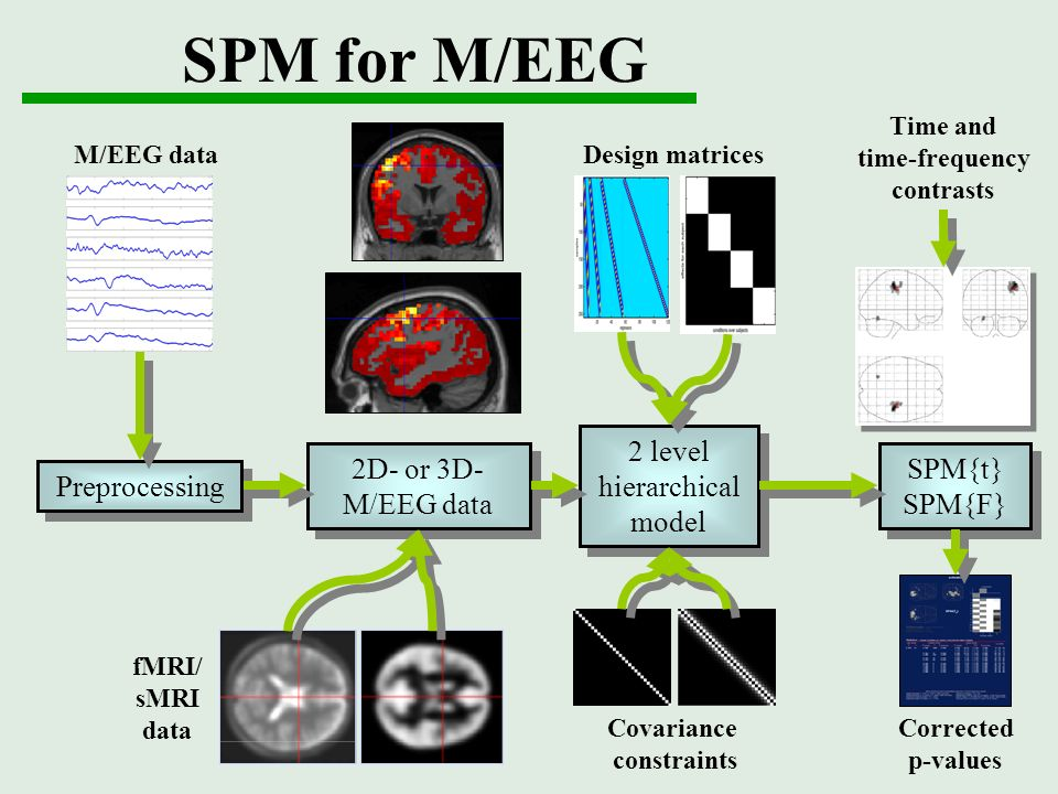 SPM for M/EEG M/EEG data fMRI/ sMRI data Design matrices Time and time-frequency contrasts Corrected p-values Covariance constraints Preprocessing 2D-