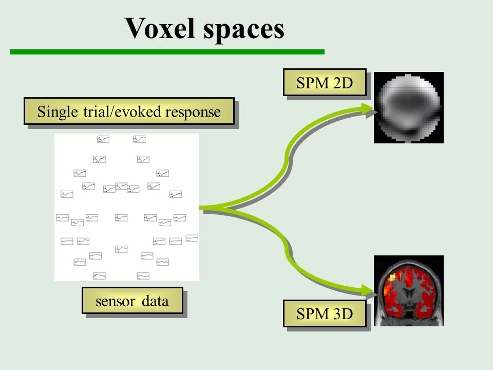 Voxel spaces sensor data SPM 2D SPM 3D Single trial/evoked response