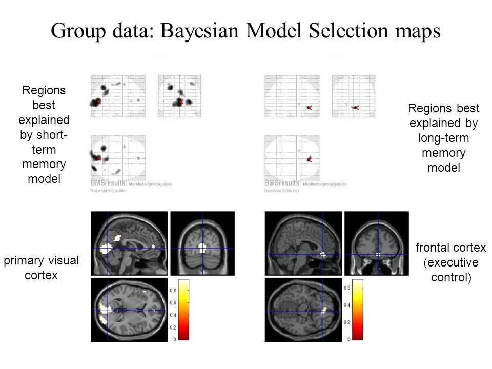 primary visual cortex Regions best explained by short- term memory model Regions best explained by long-term memory model frontal cortex (executive control) Group data: Bayesian Model Selection maps