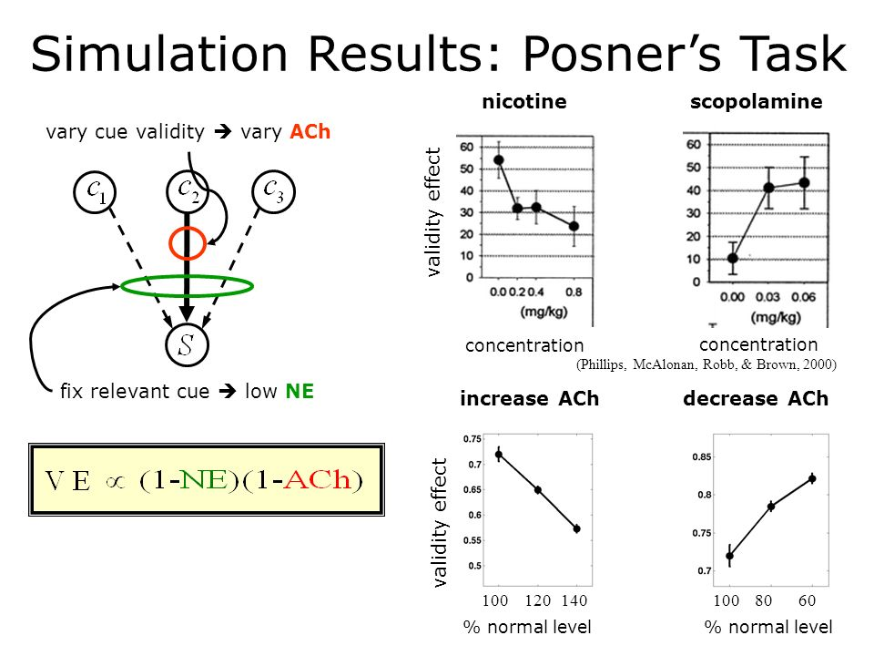Simulation Results: Posners Task increase ACh validity effect % normal level 100120140 decrease ACh % normal level 1008060 vary cue validity vary ACh fix relevant cue low NE nicotine validity effect concentration scopolamine (Phillips, McAlonan, Robb, & Brown, 2000)