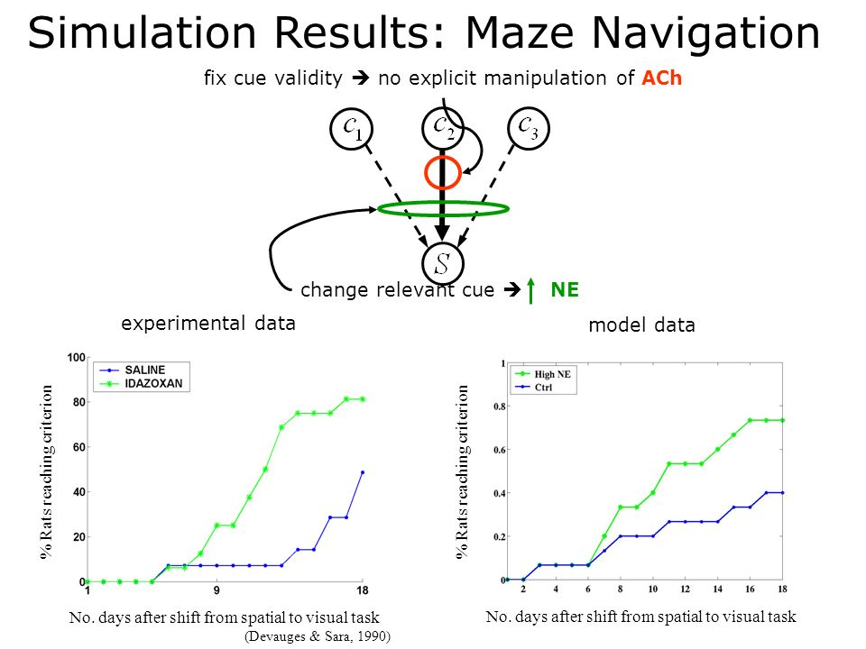 Simulation Results: Maze Navigation fix cue validity no explicit manipulation of ACh change relevant cue NE % Rats reaching criterion No. days after s