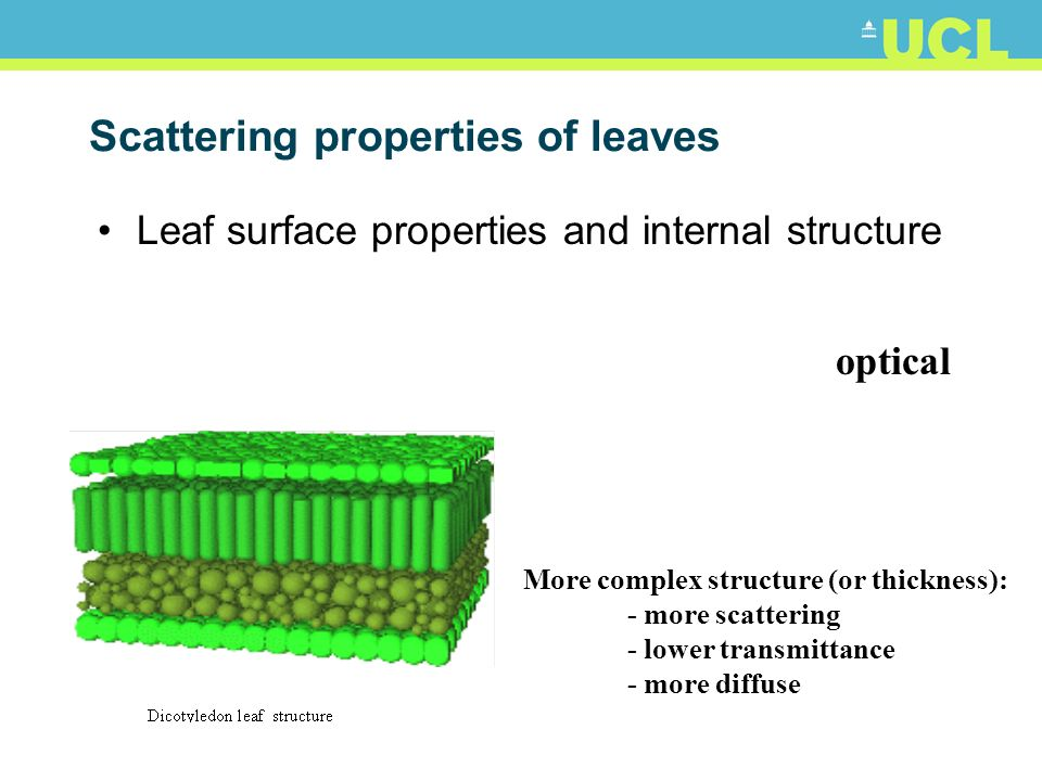 Scattering properties of leaves Leaf surface properties and internal structure optical More complex structure (or thickness): - more scattering - lowe