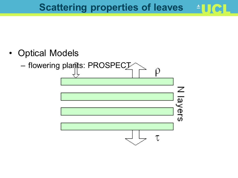 Scattering properties of leaves Optical Models –flowering plants: PROSPECT
