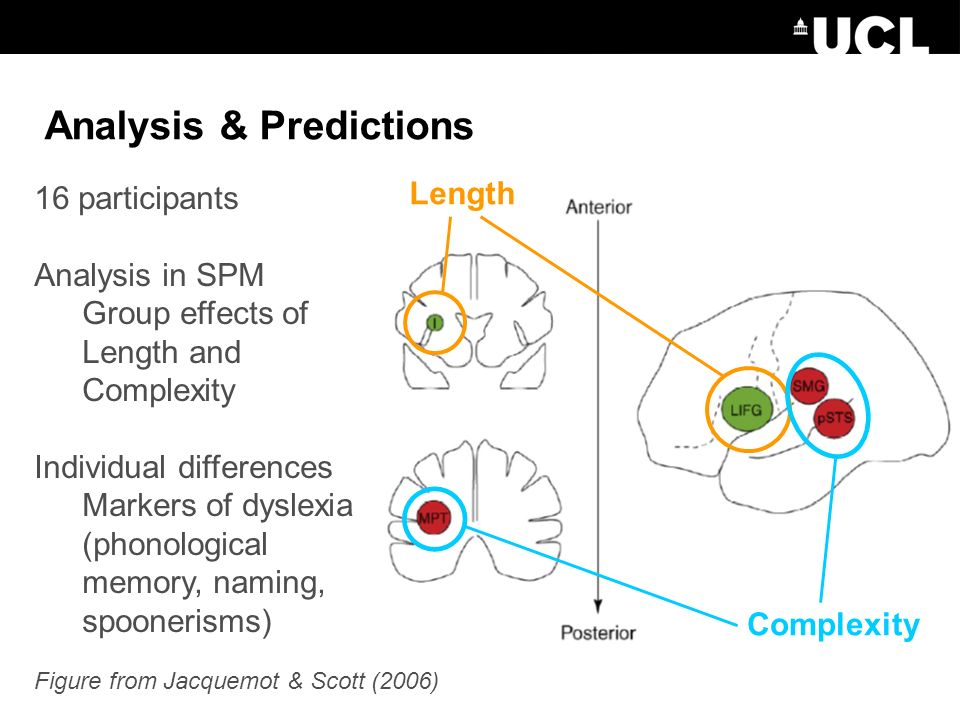 Analysis & Predictions Complexity Length Figure from Jacquemot & Scott (2006) 16 participants Analysis in SPM Group effects of Length and Complexity Individual differences Markers of dyslexia (phonological memory, naming, spoonerisms)