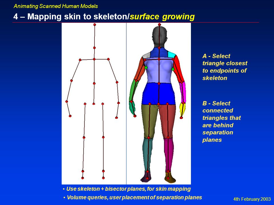 4th February 2003 Animating Scanned Human Models 4 – Mapping skin to skeleton/surface growing Use skeleton + bisector planes, for skin mapping Volume queries, user placement of separation planes A - Select triangle closest to endpoints of skeleton B - Select connected triangles that are behind separation planes